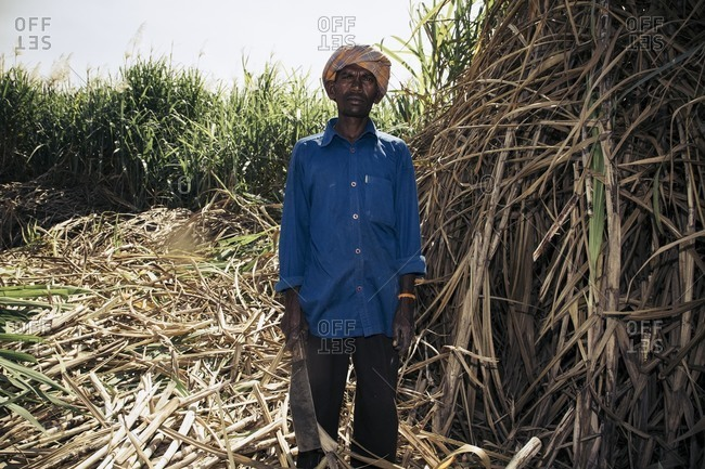 Bagalkot, Karnataka, India - November 28, 2014: Male sugar cane worker in India