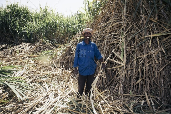 Bagalkot, Karnataka, India - November 28, 2014: Male sugar cane worker, India