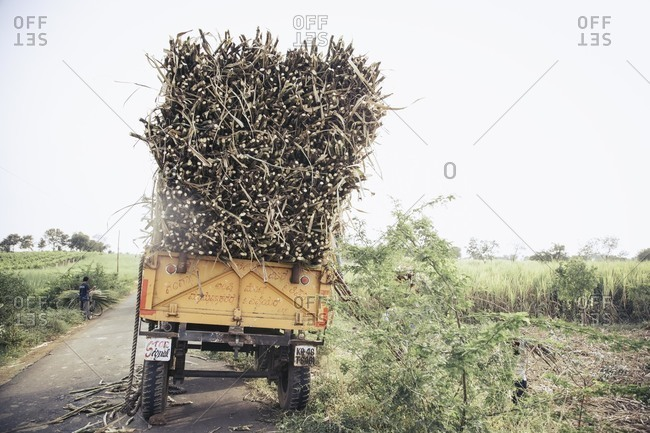 Bagalkot, Karnataka, India - November 28, 2014: Harvested sugarcane on a cart