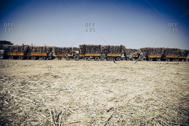 Tractors of sugarcane in India