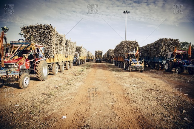 Bagalkot, Karnataka, India - November 30, 2014: Tractors full of sugarcane, India