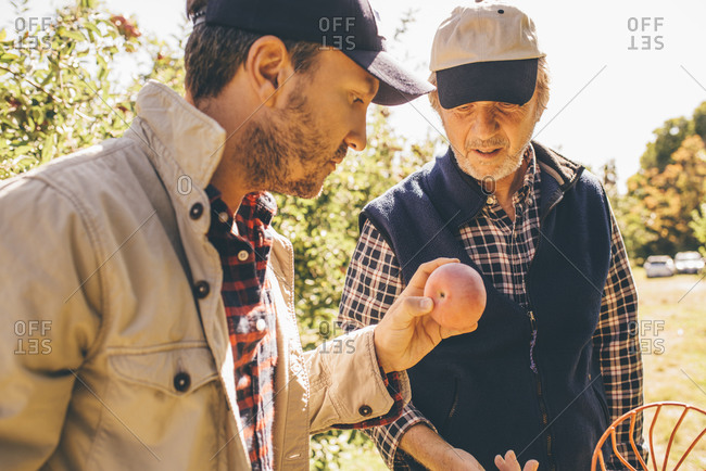 Men examining a freshly picked apple
