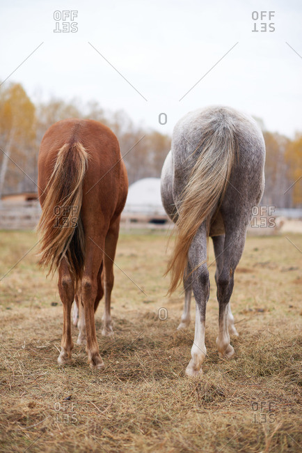 Two horses standing in a field side by side