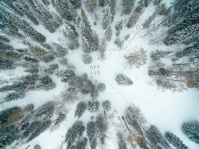 Overhead view of a snow covered forest