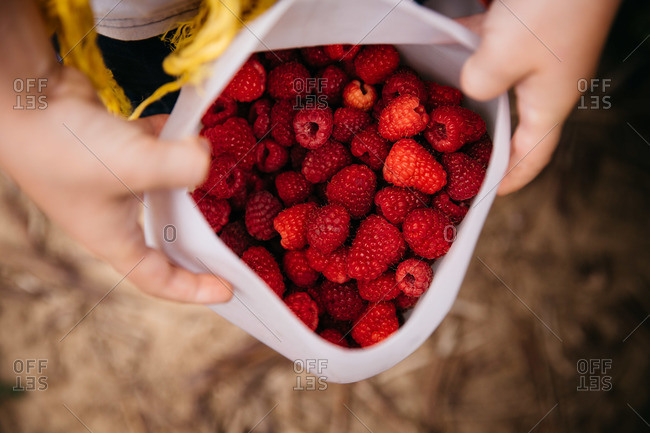 Overhead view of hands holding open a bag full of raspberries