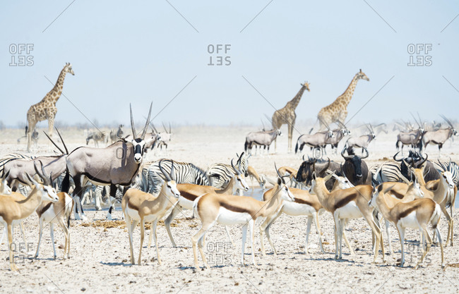 Wild animals at a waterhole, Etosha National Park