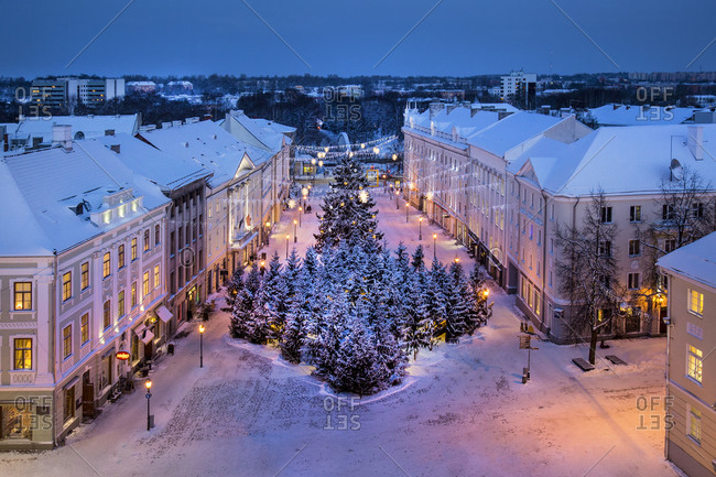 Snowy Christmas trees in town hall square, Estonia