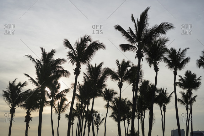 Palm trees, Bahia, Brazil