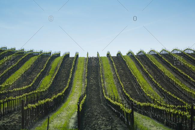 View to vineyard, California