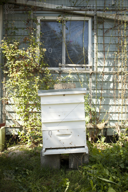 Beehive box in in a backyard
