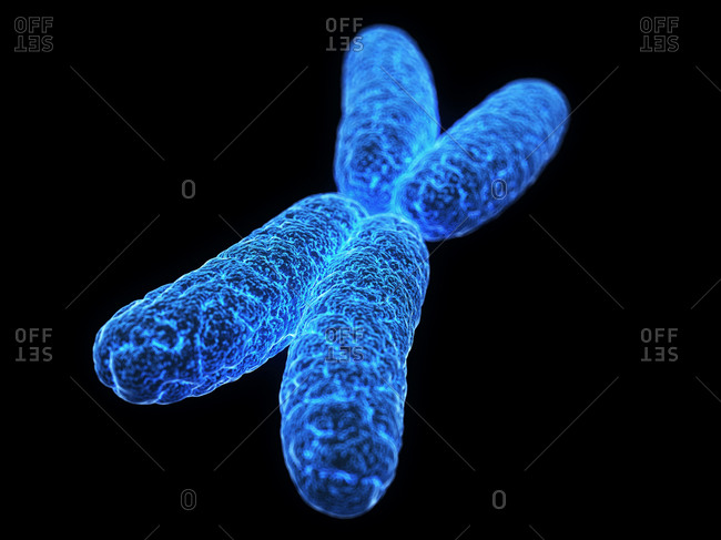Microscopic view of the X chromosome