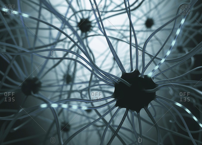 Human nerve cells