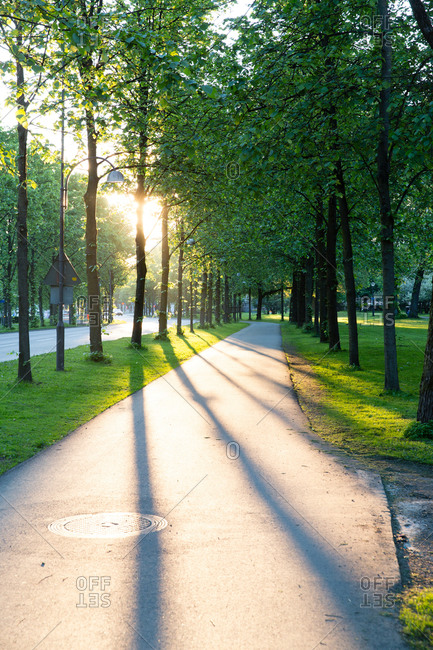Tree-lined city sidewalk at sunset