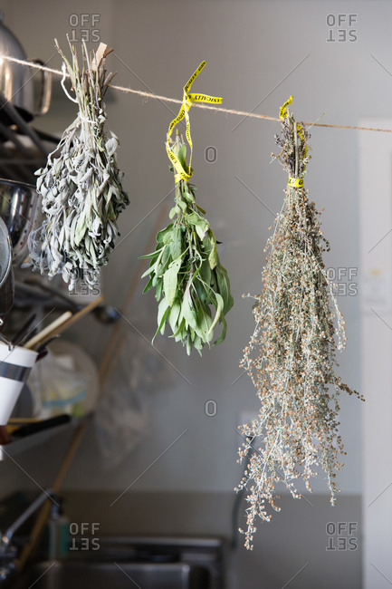 Herbs drying on a line
