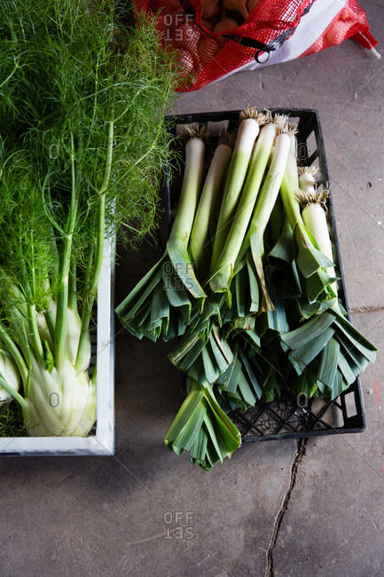 Overhead view of fennel and leek