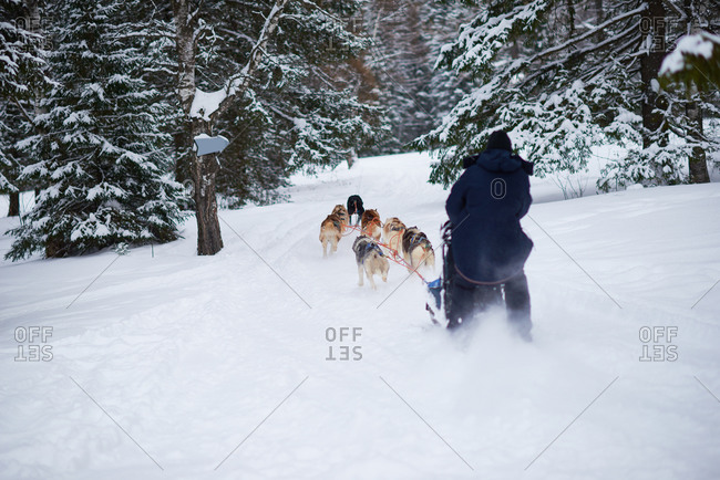 Man being pulled on a dogsled