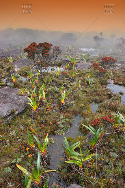 Details on top of Mount Roraima