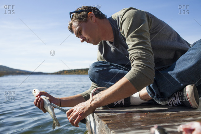 A fisherman guts and cleans a Rainbow Trout (Oncorhynchus mykiss) while sitting on a wooden dock