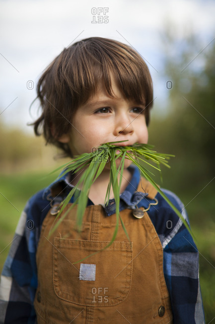 portrait of a young boy with long grass in his mouth