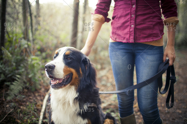 Outdoor portrait of a young woman with her Bernese Mountain Dog on a leash