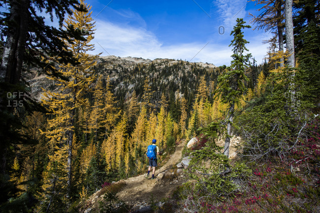 A young  hiker through the larch trees in the Pasayten Wilderness on the Pacific Crest Trail in Washington
