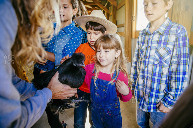 Girl petting chicken in barn