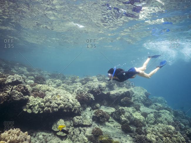 Snorkeling near coral reef in tropical ocean
