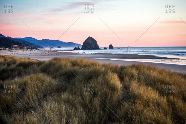 Tall grass under sunset sky on Cannon Beach, Oregon
