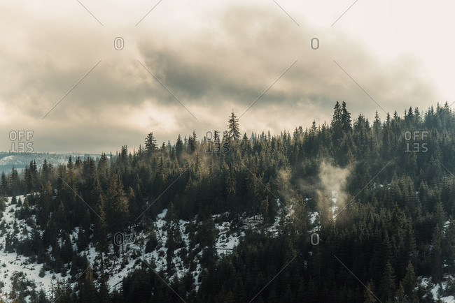 Light fog in a snowy forest