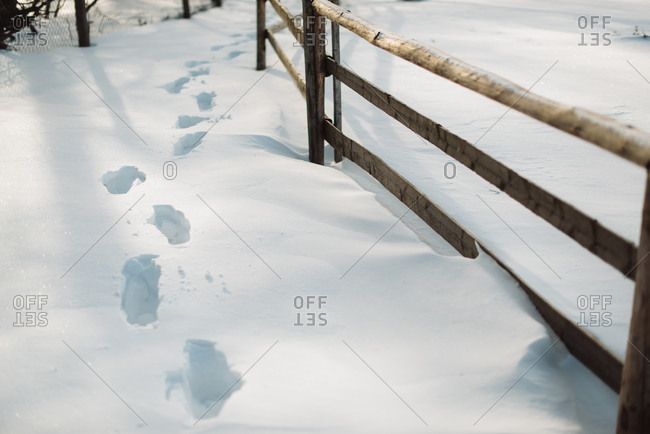 Footprints in the snow by a wooden fence