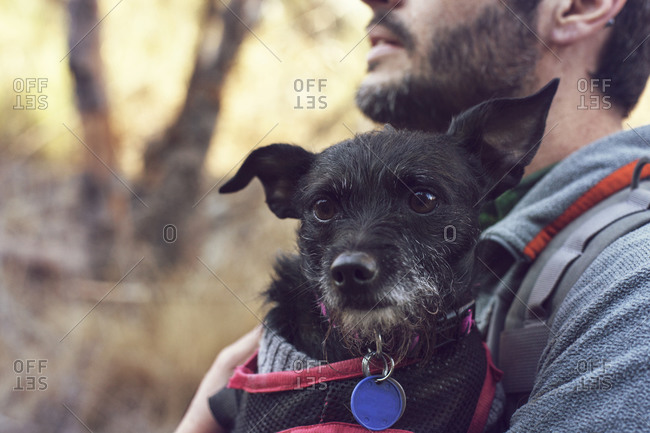 Man holding a small dog in a harness