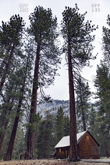 Mountain cabin and tall pine trees