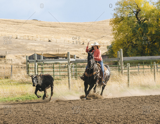Woman chasing cattle at rodeo