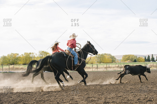 Herders chasing cattle at rodeo