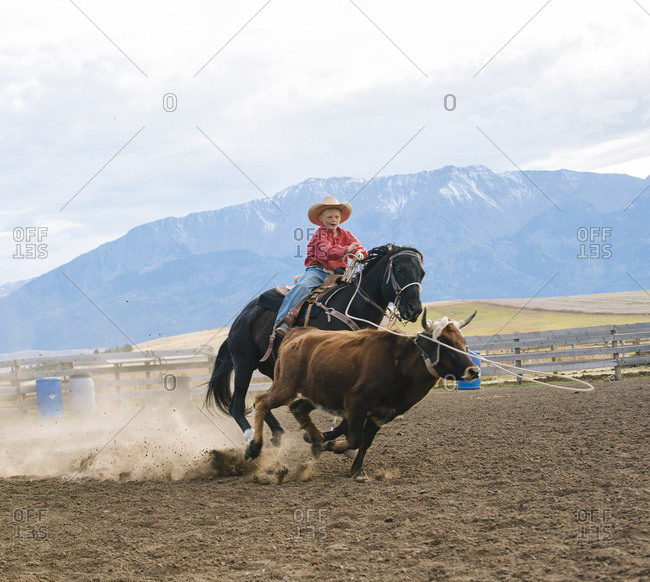 Boy chasing cattle at rodeo
