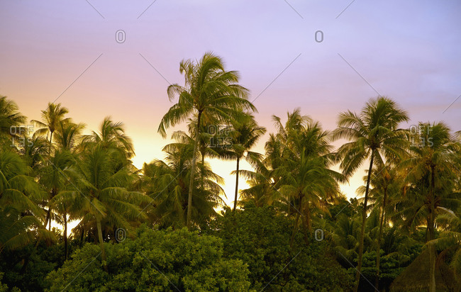 Sunset sky over palm treetops