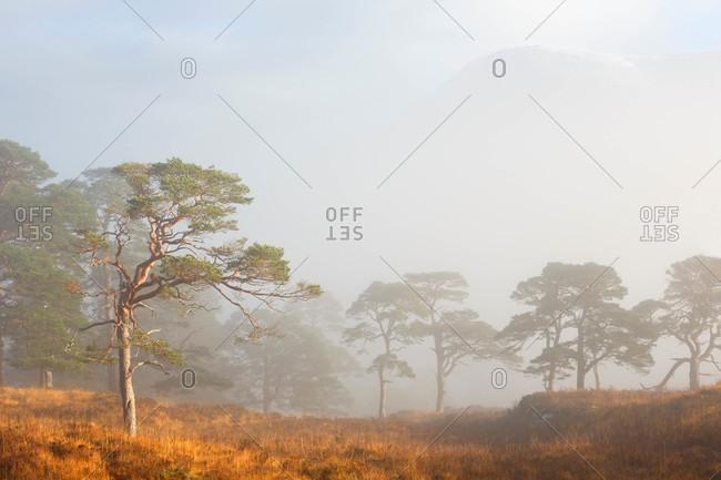 Misty morning in rural Scotland