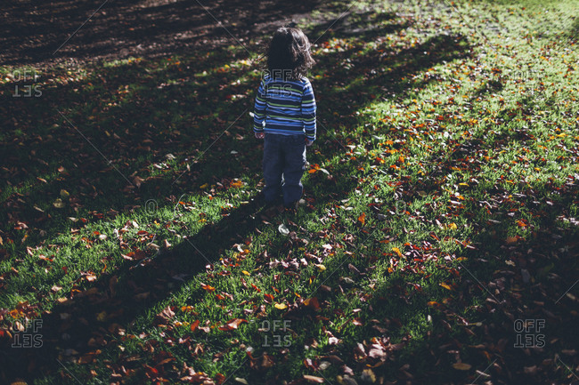 Boy standing alone on meadow with autumn leaves