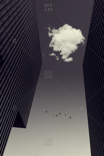 Cloud between office towers and flying birds