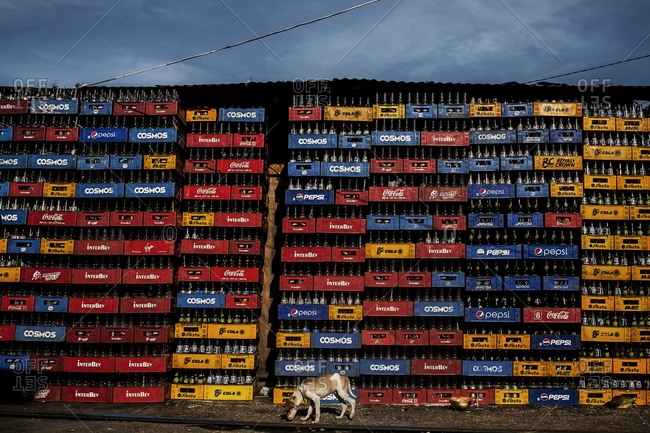 Dog walking in front of a stack of soda crates