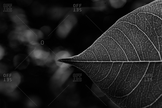 Close-up of a single leaf