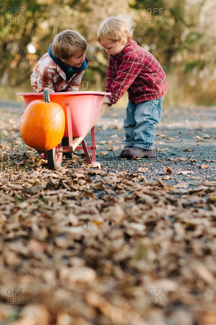 Two young boys with a wheelbarrow at the pumpkin patch