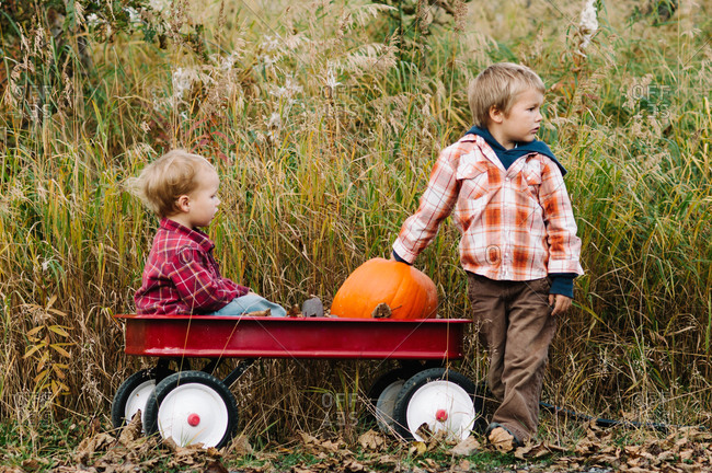Toddler boy puts a pumpkin in red wagon with his younger brother