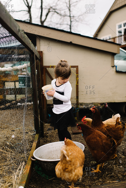 Young girl feeding chickens