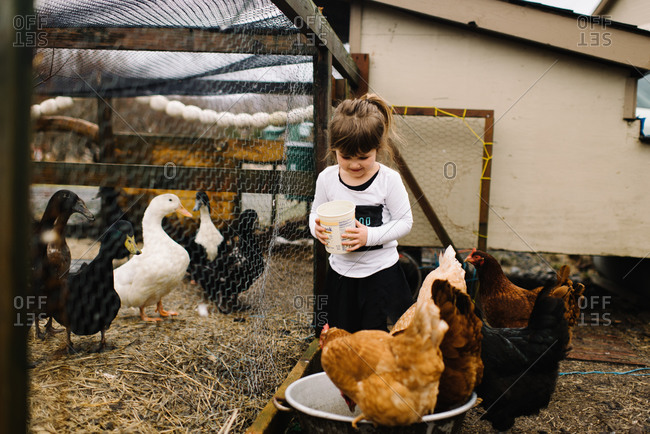 Young girl watches chicken eat in their pen