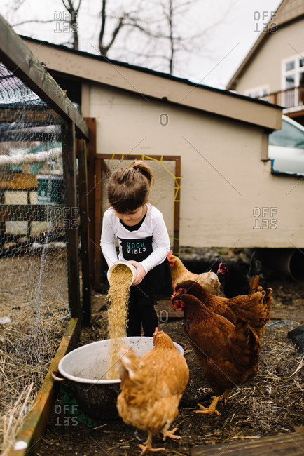 Young girl pouring feed into bowl for chickens