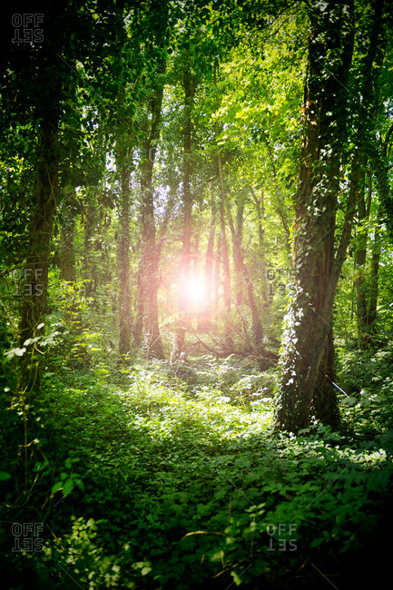 Light glowing in a dense green forest