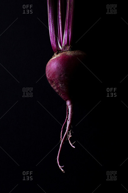 Single beet on a black background