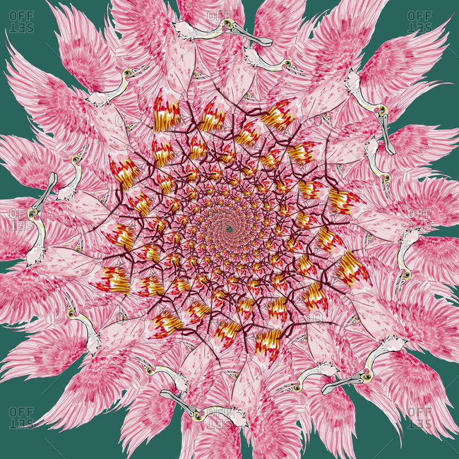 Pink birds in circular pattern