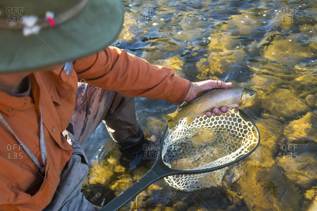 Fly fisherman catching a trout